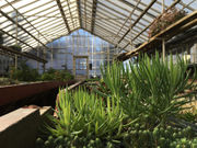 This 90-year-old greenhouse is Michigan's own 'secret garden'