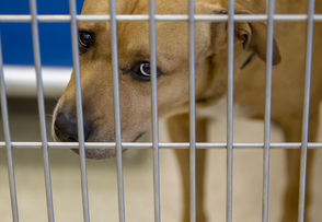 Kent County Animal Shelter in Grand Rapids