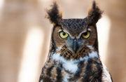 Injured eagles, owls, hawks get new chance at life at Michigan raptor sanctuary