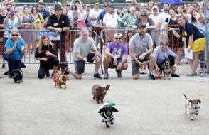 Dachshund Races benefiting ARNO were a special treat Saturday (Oct. 20) at Deutsches Haus Oktoberfest