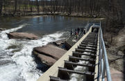 Easthampton marks 'World Fish Migration Day' at Manhan River fish ladder