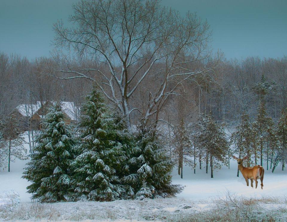 PHOTOS: 'Winter Scenes' captured by the Syracuse Camera Club