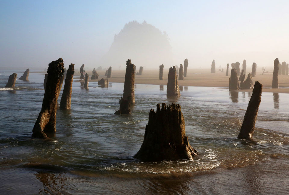 Ghost forest emerges from the ...