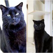 Area pets up for adoption April 4 (PHOTOS)