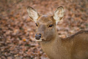 CNY man ticketed for shooting deer from bedroom window, using bait