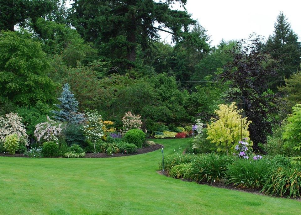 8 Tips For Growing Beautiful Hostas In Oregon Oregonlivecom