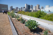 High above the Morial Convention Center, a rooftop garden grows fresh food for conventioneers