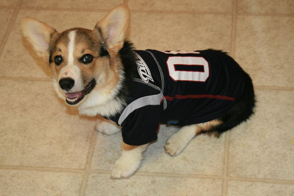 patriots tom brady dog jersey
