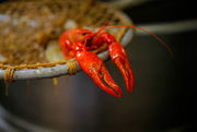 Who boils the best crawfish in New Orleans? Friday is the nomination deadline