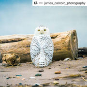 29 amazing Staten Island wildlife photos on Instagram