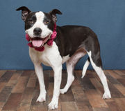 Area pets up for adoption August 8, 2018 (PHOTOS)