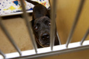 Dogs and cats from Carolinas headed to N.J. Want to adopt?