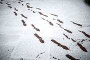 What this weekend's snow, rain, ice and cold mean for central Pa.: Full coverage