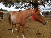 2 Oregon women sentenced in neglect of over 80 horses