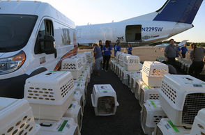 Escambia County Animal Services, Friends of The Escambia County Animal Shelter, and the Humane Society of the United States loaded 63 dogs from hurricane-impacted shelters in Bay County onto a Brasilia cargo plane to be transported to a partner shelter in San Diego, where they will be made available for adoption. Thirty additional dogs on board the plane were taken from the Escambia County Animal Shelter in order to make room for additional animal transfers from hurricane-impacted shelters. The animals that were transferred were already up for adoption at shelters prior to the storm.