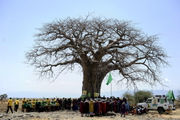 Climate change appears to be speeding the deaths of world's largest, oldest trees: study