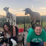 Alert: Goat yoga with wine happening in Hillsboro this week