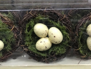At the Bard Avenue location, these egg nests contain edible eggs.
