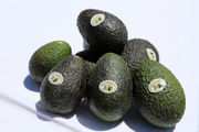 Avocados 101: How to pick, store, and keep them from turning brown