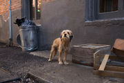 How 'Benji' found his way to New Orleans -- and new life on Netflix