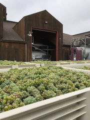 Views from a Napa winemaker: Cakebread Cellars' Stephanie Jacobs