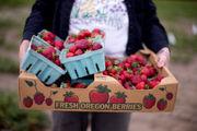 It's berry season: 10 U-pick farms to visit in the Portland area