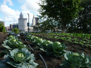 Cleveland's Ohio City Farm faces losses, adds resources, opens doors (photos)