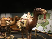 Exploring the Silk Road, and its lessons for today, at COSI in Columbus (photos)