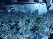 House fire leads to the discovery of 180 marijuana plants in 'sophisticated' growth operation