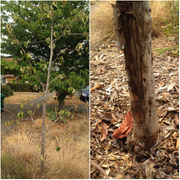 Can trees grow in parking strips? How to add drainage to clay soil: Ask an expert