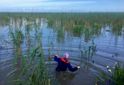 Insects feast on Louisiana wetlands, inviting the Gulf in