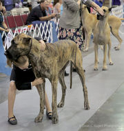 Lagniappe Dog Show returns to Kenner