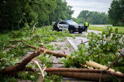 Driver escapes injury after winds topple tree onto car