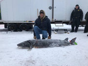 Michigan's sturgeon season on Black Lake was over in 2 hours