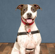 Area pets up for adoption, July 18, 2018 (PHOTOS)
