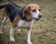 N.J. pets in need: April 16, 2018