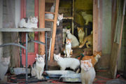 172 cats (and counting) rescued from 'horror movie' home are desperate for your help