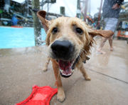 Dogs take over Jersey Shore water park for end-of-the-summer pool party (PHOTOS)