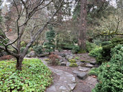 Should Ashland cut down 2 old trees for a Japanese garden? (photos)