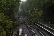 Thunderstorm topples trees, causes delays to commute