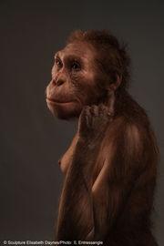 Sculpture of extinct human relative acquired for new UM museum