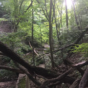 Doan Brook flows through Cleveland's history