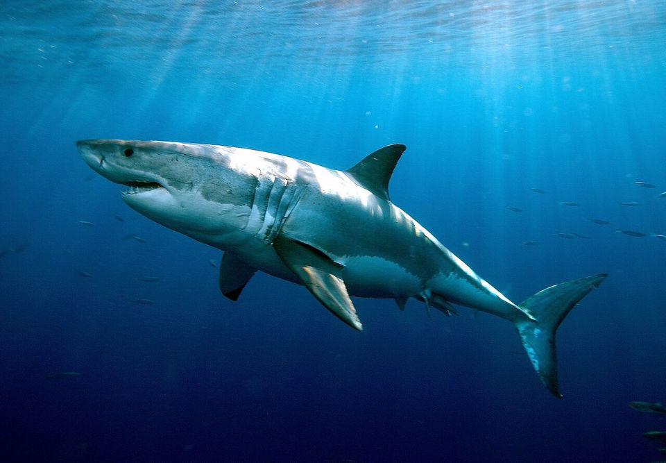 Sharks in the water: What's swimming off the coast of