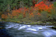 Oregon fall foliage: When will trees reach peak color?