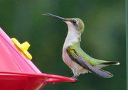 See amazing hummingbird photos from our readers