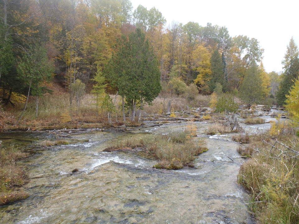 Land in 20 Michigan counties available in DNR auction