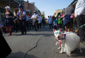 """The French Quarter will be full of long bois, floofs and woofers alike on Sunday (Feb. 24) as The Mystic Krewe of Barkus' doggo parade hits the streets at 2 p.m. The dog lingo is no nerdier than the parade itself, which this year is themed """"The Big Bark Theory: Barkus Goes to Comic Con."""" Out-of-this-world costumes will match the equally heartwarming """"tails"""" of the canine court. """"The presentations are just sometimes unbelievable,"""" spokesperson Catherine Olivier said by phone Wednesday (Feb. 20). Up to 1,200 furry krewe members arrive ready to roll, and seeing the costumes is one of the most exciting features of the 27-year-old parade, she said. For example, last year's """"King of Bones"""" parade inspired miniature thrones of dog bones, and for another year's """"Saturday Bite Fever"""" an owner made a miniature float that looked like a dance floor with a disco ball. """"I don't know how they did this,"""" Olivier said. The float also played music. """"You never know what you're going to see. It amazes me."""""""