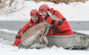 Ice rescue of deer in pond a 1st for local fire department (PHOTOS)