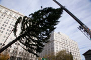 Douglas fir tree arrives at Pioneer Courthouse Square