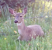Man charged with shooting 2 deer with arrows